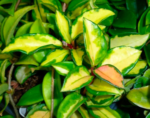8 plantas de interior que no necesitan muchos cuidados - Cuidado de plantas de interior ...
