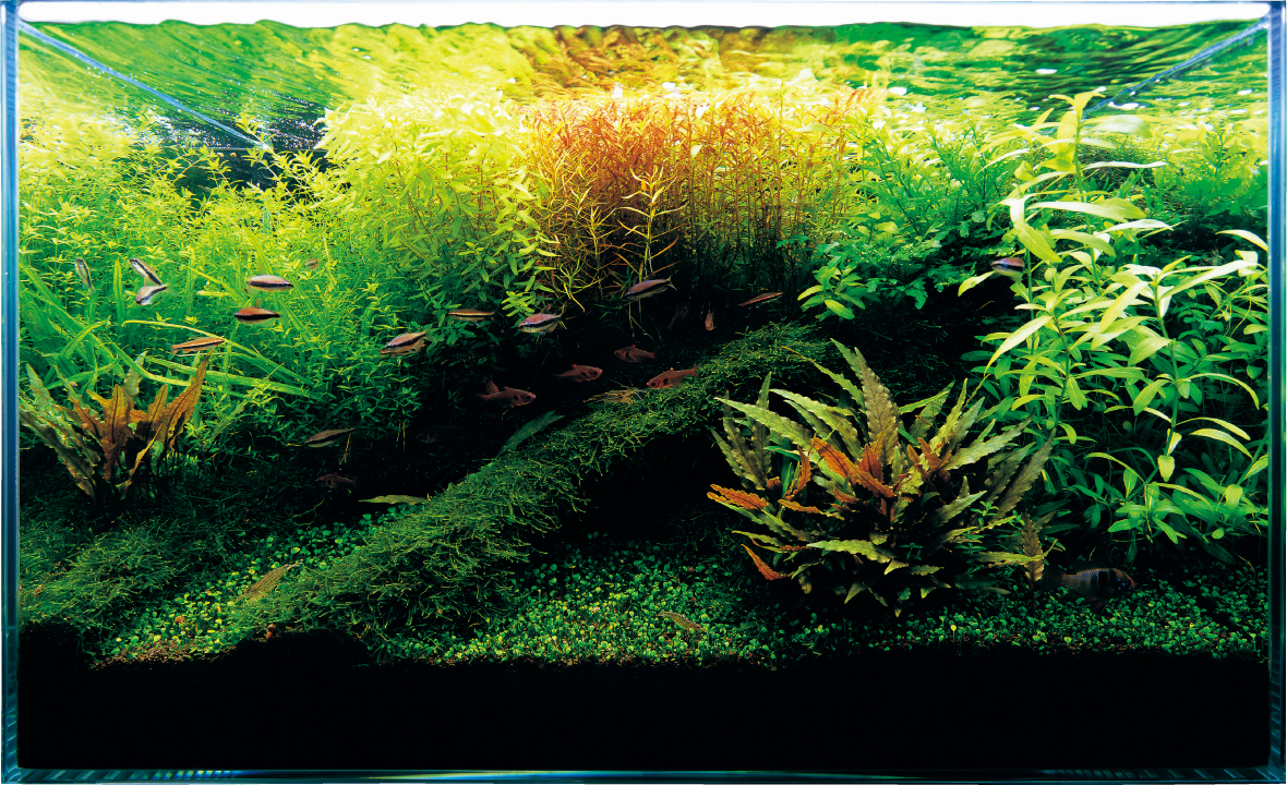 Ada fish aquariums the worlds best planted aquarium products for Plante aquarium