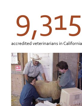 Veterinarian blog statistic block
