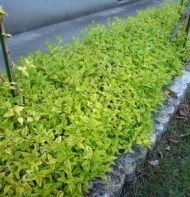 カレイドスコープ植栽例