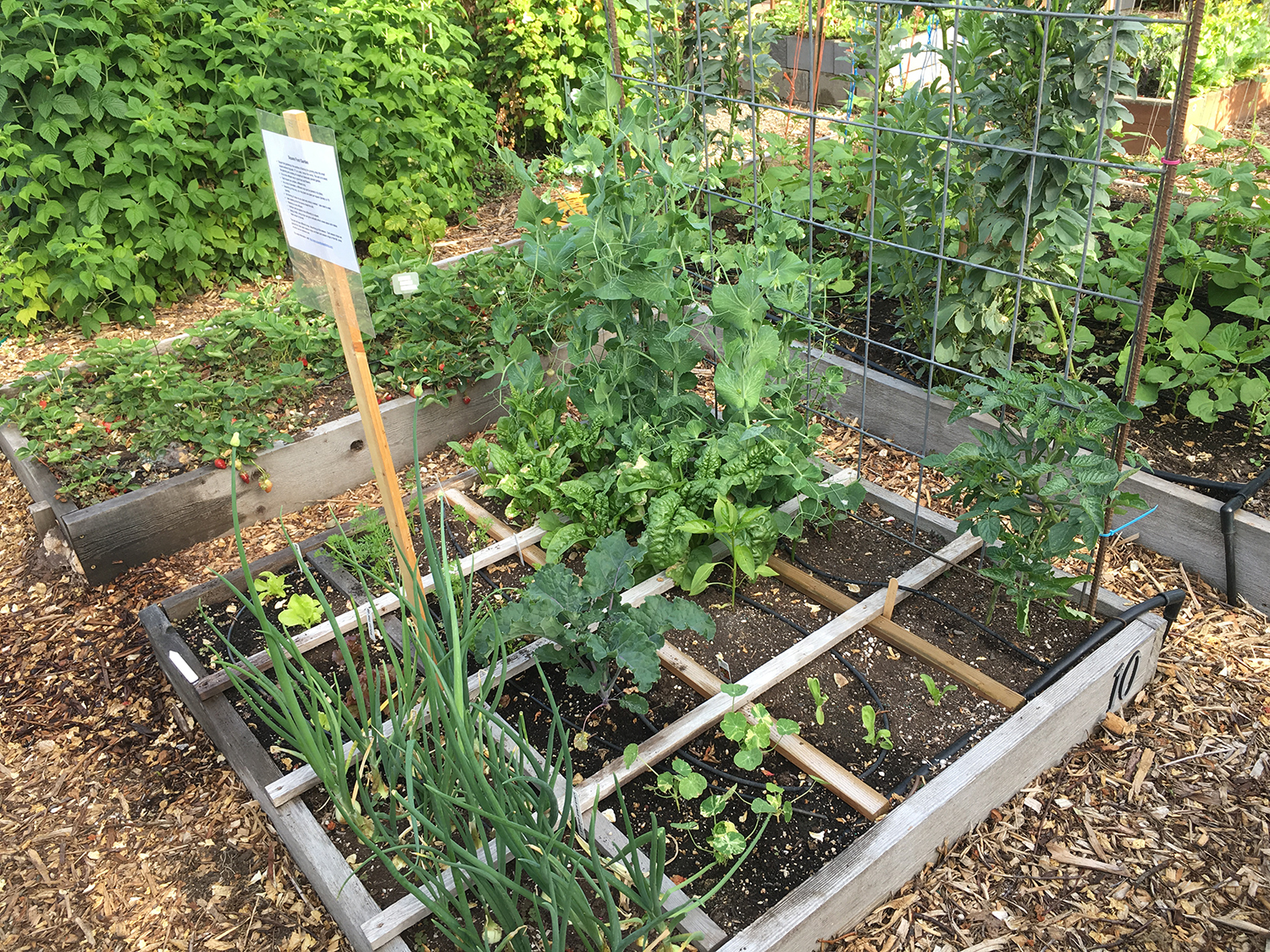 Poor soil? Build up with raised beds