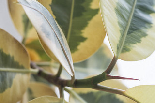 Host houseplants in best possible site to keep them healthy