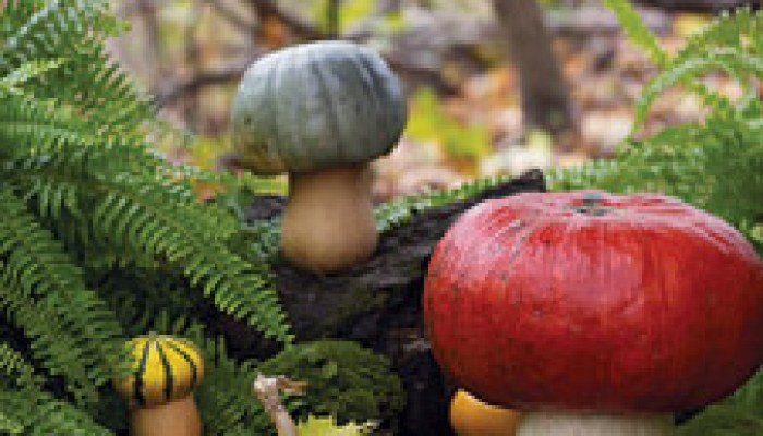 Gourd-Toadstools-1