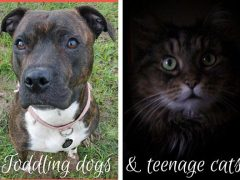 Toddling dogs and teenage cats. Have you ever noticed the similarities between toddlers and dogs or between teens and cats? A few little experiments so you can see for yourself.