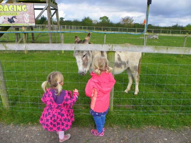 National Forest Adventure Farm - Review