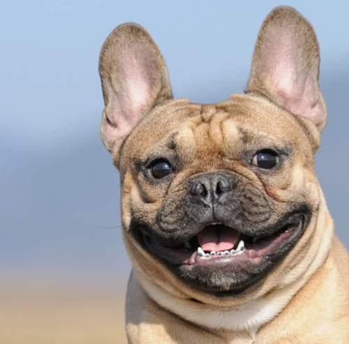 Medium Of Dogs With Braces