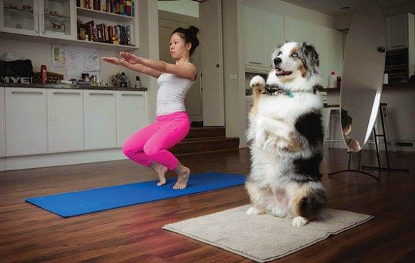animals-yoga6