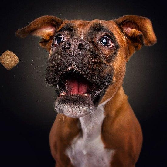 dogs-catching-treats-fotos-frei-schnauze-christian-vieler-23-57e8d0b5b5050__880
