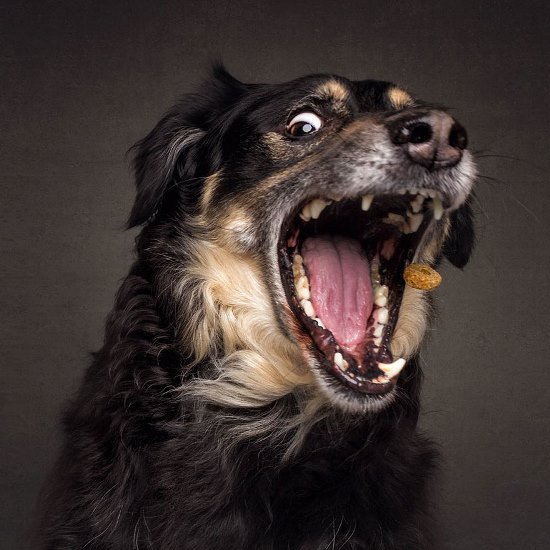 dogs-catching-treats-fotos-frei-schnauze-christian-vieler-48-57e8d0ea77c4c__880