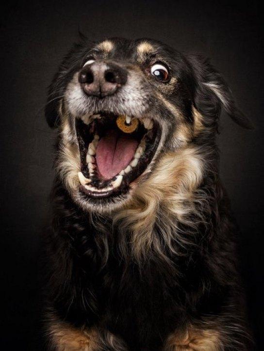 dogs-catching-treats-fotos-frei-schnauze-christian-vieler-5-57e8d091d0b4e__880