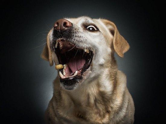dogs-catching-treats-fotos-frei-schnauze-christian-vieler-57-57e8d0fd14163__880