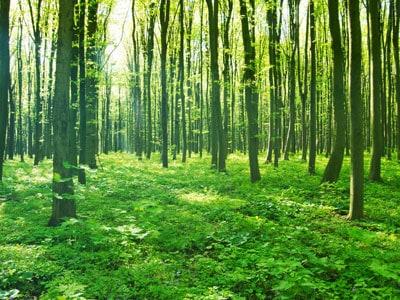 Pocahontas County WV Managed Timberland