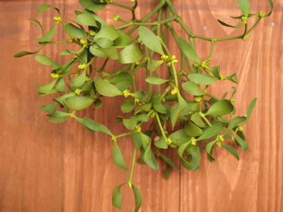 mistletoe-1902593_1920