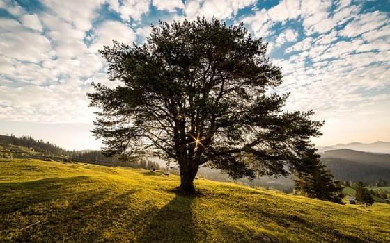 tree-338211_640