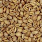 Weyermann Pale Wheat Malt