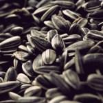Полезная зараза: Можно ли поправиться от семечек подсолнуха?