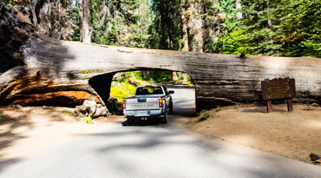 Sekwoje - las olbrzymów w USA