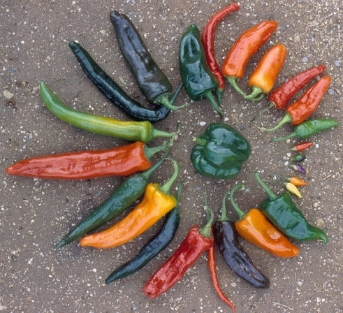 nss-peppers