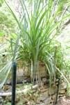 Iris Growth