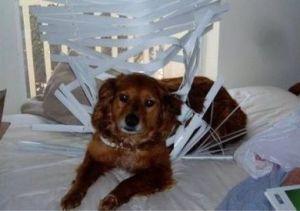 Dog Proof Blinds