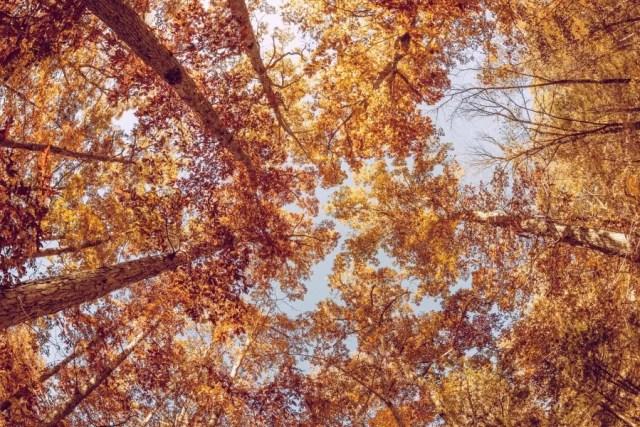 Kultowe perfumy idealne na jesień