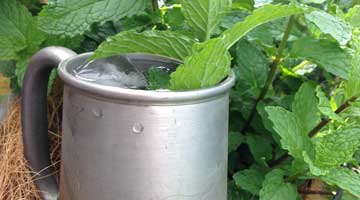 Vodka Cucumber/Mint Lemonade for a Hot Day