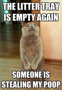 Cat caption - the litter tray is empty again, someone is stealing my poop