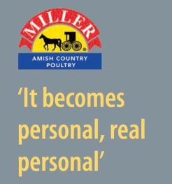 "The bulk of Miller Poultry's chicken is sold directly to retailers under its flagship brand, Miller Amish Country Poultry, which includes birds raised without antibiotics as well as a certified organic line. ""When a company goes to the extent to put their own name on the product, it adds a whole different element. It becomes personal, real personal,"" Miller says on the company website. Toward that end, his goal is to sell mostly to the retail grocery markets in the Midwest and build customer loyalty. Still, word gets around and in recent years demand for Miller Poultry's products spread to other regions. Where they once sold to retailers in a 150-mile radius, Miller Poultry's chicken can now be found in stores from new York city to new Mexico under the brands pine Manor Farms, crystal Valley and Katie's Best, as well as Miller Amish Country Poultry. Half of Miller Poultry's production is now air-chilled, a more expensive process than water chilling that proponents say results in more tender, flavorful meat and a crispier skin when cooked. As of July 2016, Miller added, all birds are raised on non-GMO diets."