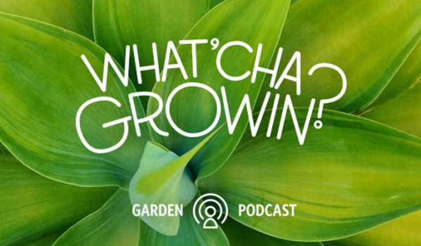 What'cha Growin?