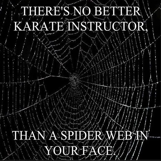Spider Web Karate copy