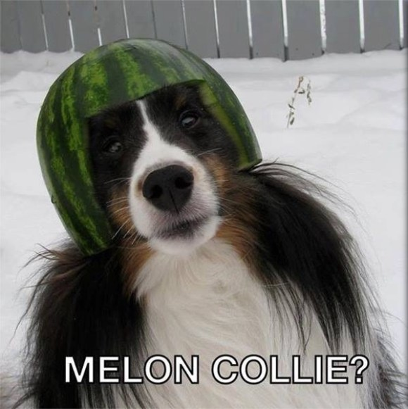 Mellon Collie copy