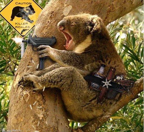 Killer Koalas copy