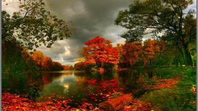 Priroda i pejzaži - Slike za pozadinu - wallpapers