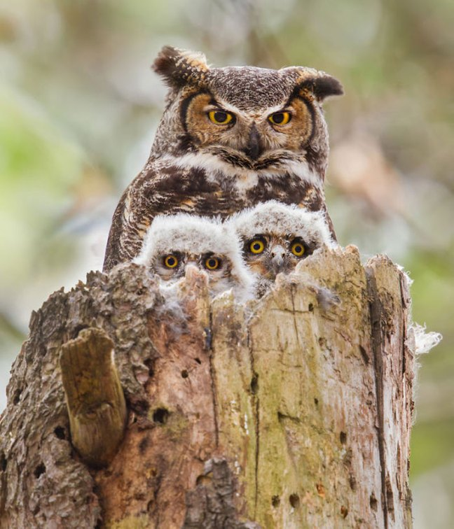 Cute-pictures-of-Animals-Families13