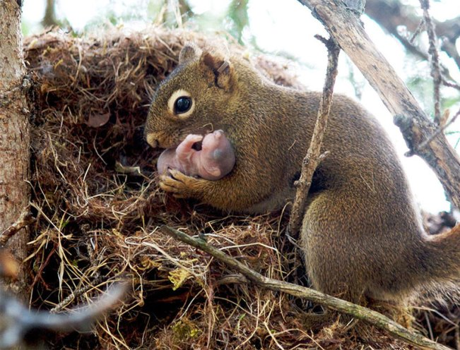 Cute-pictures-of-Animals-Families19