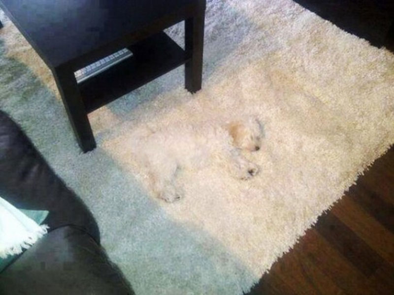 These-15-Pets-Are-The-Masters-Of-Disguise7