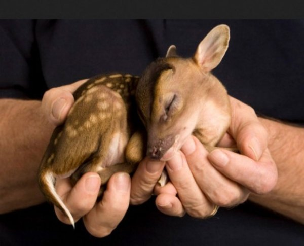 These-20-Baby-Animals-Are-So-Small-They-Can-Fit-In-The-Palm-Of-Your-Hand1