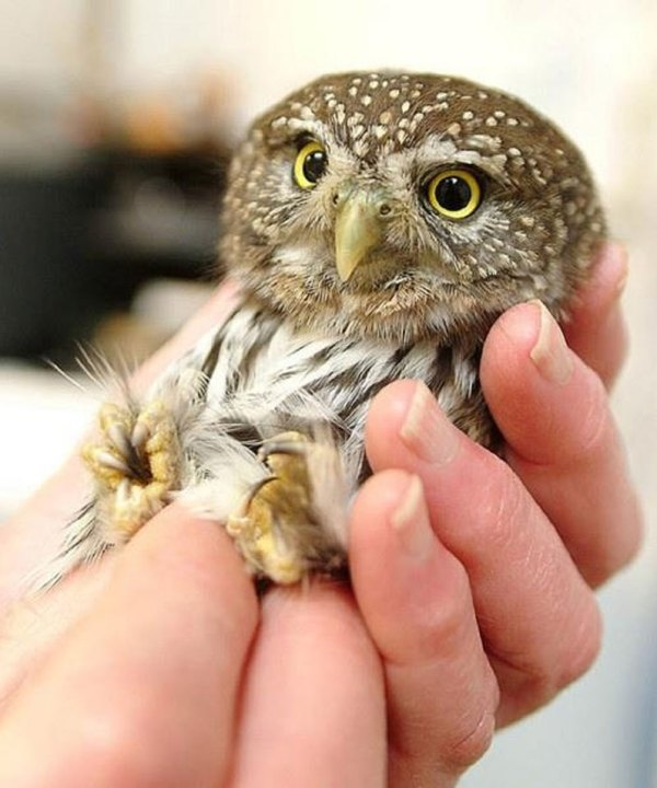These-20-Baby-Animals-Are-So-Small-They-Can-Fit-In-The-Palm-Of-Your-Hand7