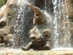 adorable-baby-elephant-spraying-water-out-of-trunk