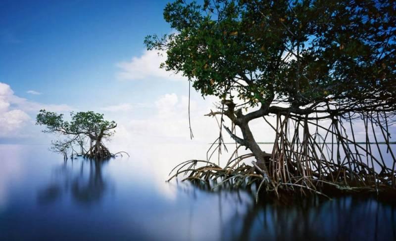 Эверглэйдс Флорида