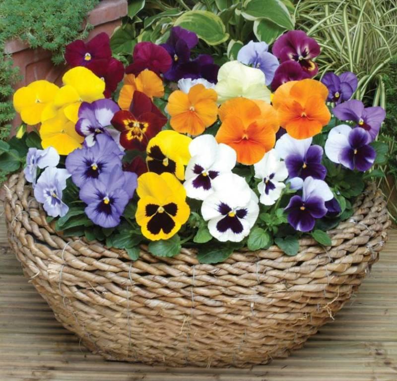 цветы корзине