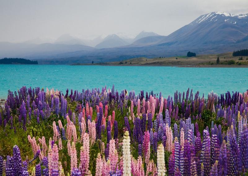 голубое озеро Пукаки Новая Зеландия, lake Pukaki