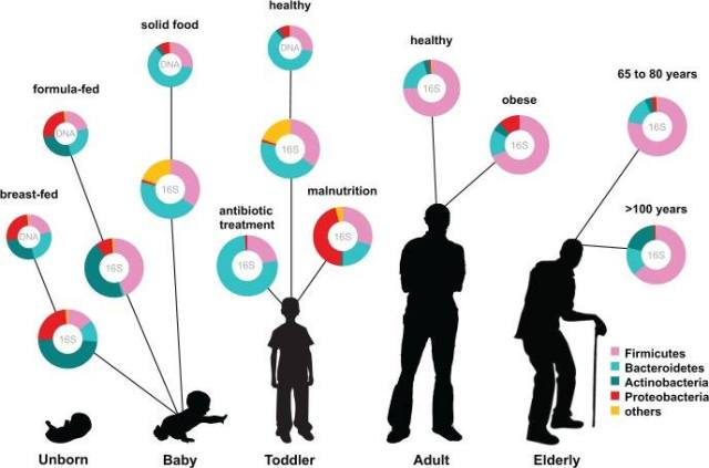 Human microbiota: onset and shaping through life stages and perturbations.