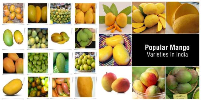 Mango Diversity