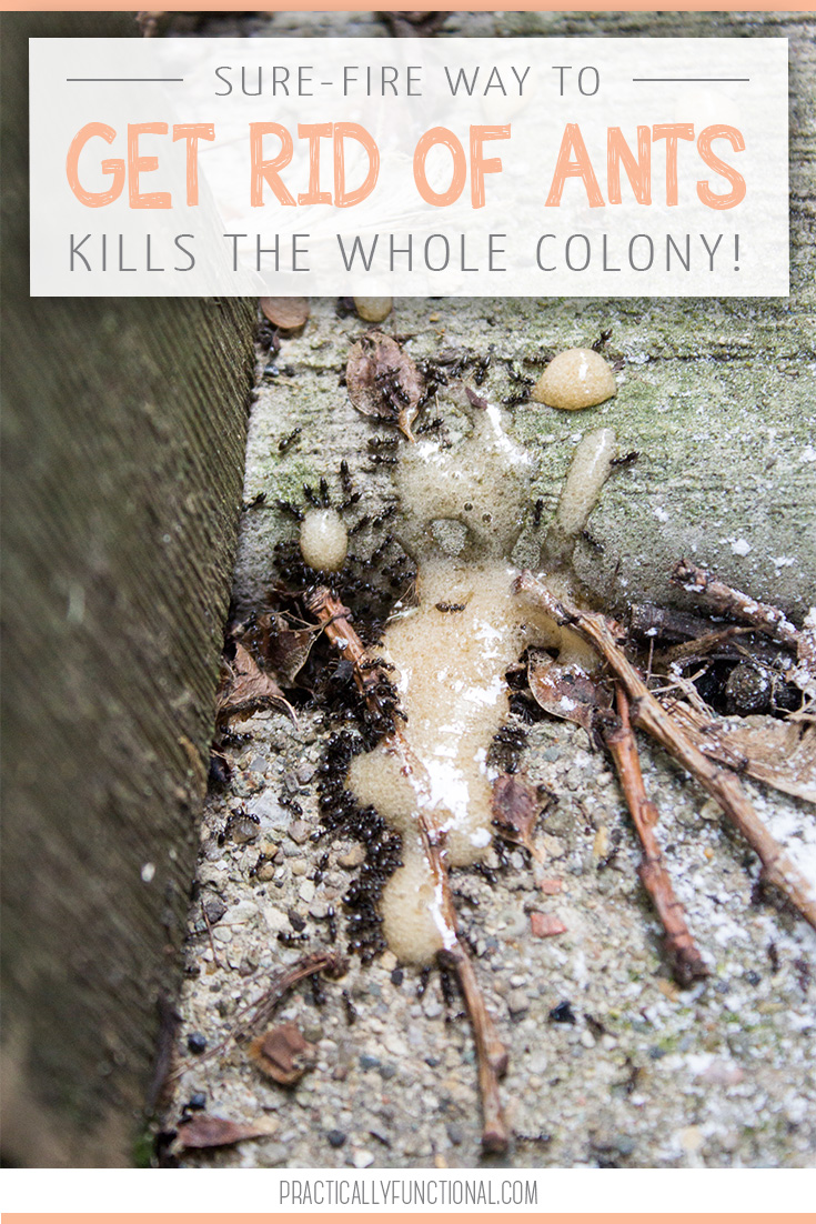 Contemporary How To Get Rid Roaches Ants Borax Boric Acid Vs Borax Slime Boric Acid Or Borax All You Need To Kill Whole Colony Is How To Get Rid houzz-03 Boric Acid Vs Borax