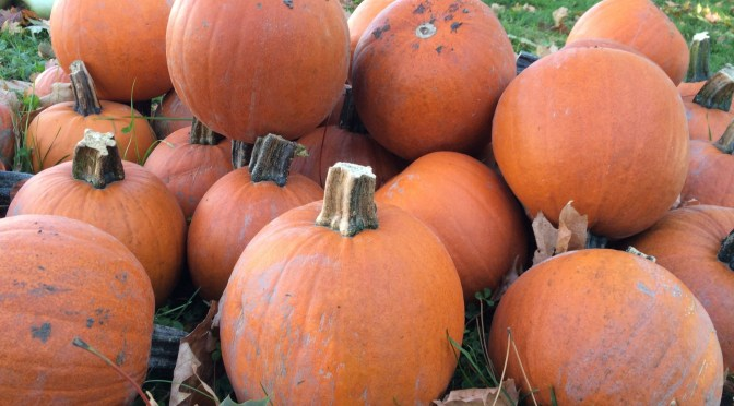 pumpkin-taken by Linda