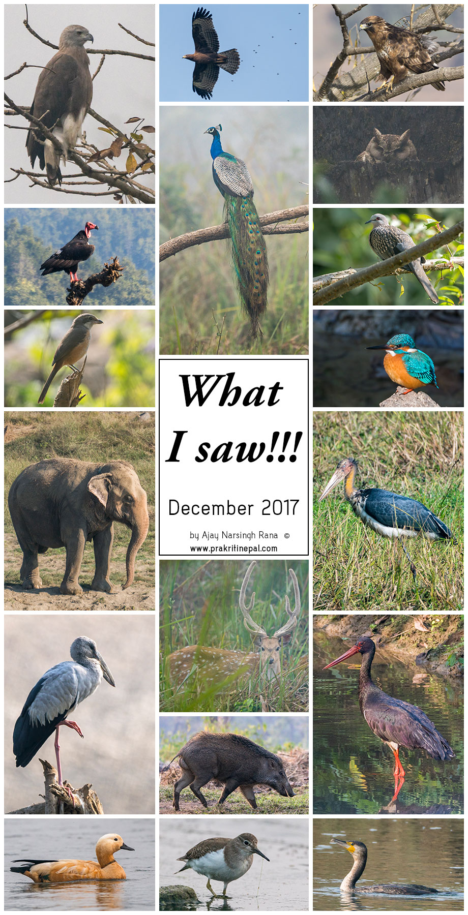 what i saw - december 2017