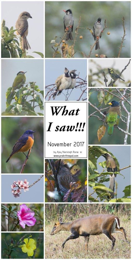What I saw - November 2017
