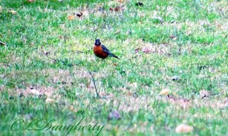 Robins 2