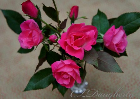 last of summer roses